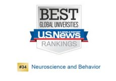 Best Global Universities Ranking