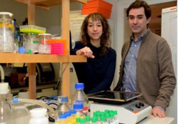 Els investigadors de la UB Mónica Pardo i Josep M. Canals han participat en aquesta recerca